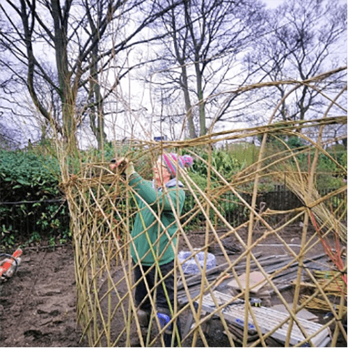 Building living willow natural fences